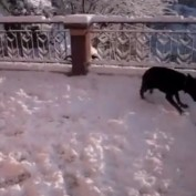 Dog goes absolutely nuts after discovering snow for first time!