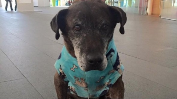 TV Star Helps Senior Stray Fight Cancer