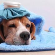 Dog Flu Strain Has Vets Across US Warning People of Dangers