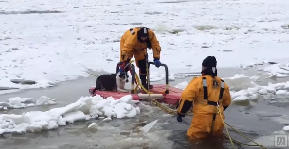 Dog Goes on Winter Wonderland Walk and Falls Through Thin Ice