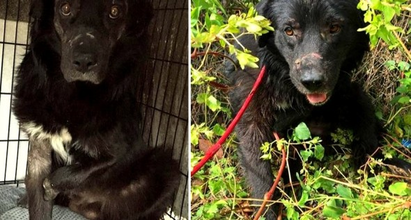 Dog Who Lost Foot in a Bear Trap Fighting for a Better New Year