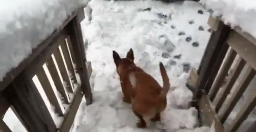 Puppy's first snow experience goes just like you'd imagine