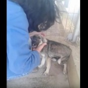 When An Abused Dog Is Pet For The First Time, It Will Break Your Heart