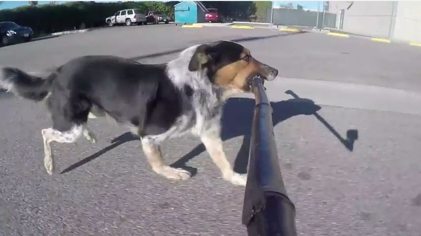 Dog Finds an Acceptable Use for a Selfie Stick