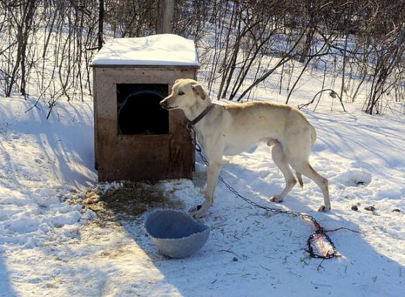 FBI's New Animal Cruelty Classification Program Begins Today