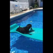 Clever dog rides pool float to fetch ball