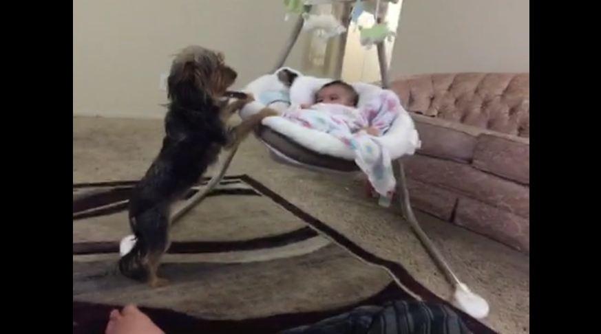 Loving dog gently rocks baby cradle