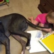 Dog Helps Little Girl Find Out What Tails Are Really For