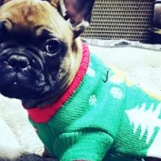 Brothers Refuse To Open Christmas Presents Until Missing Puppy Returns Home