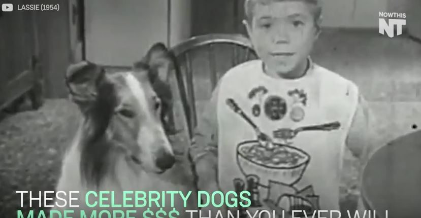 Wanna Know How Much Money Celebrity Dogs Make? Check This Out!