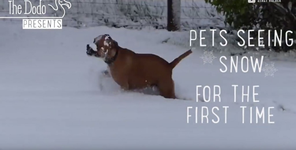 Pets Seeing Their First Snow Fall