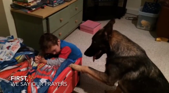 This Dog Helps His Favorite Human Get Ready for Bed