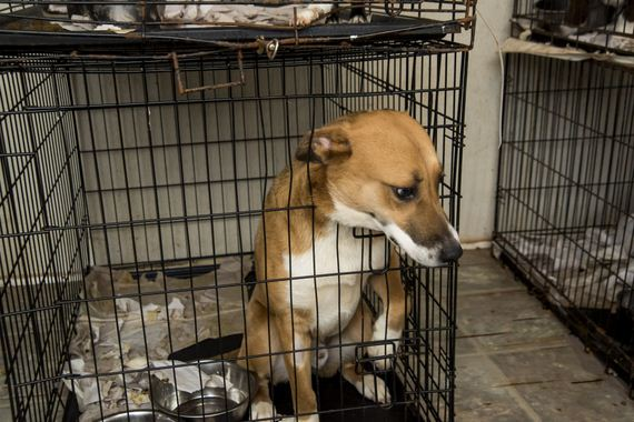 BREAKING NEWS – ASPCA Assists In Seizure of 700 Animals from Unlicensed Rescue