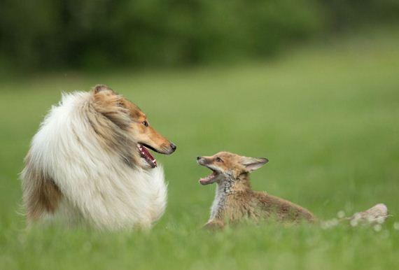 10-Orphaned-Baby-Fox