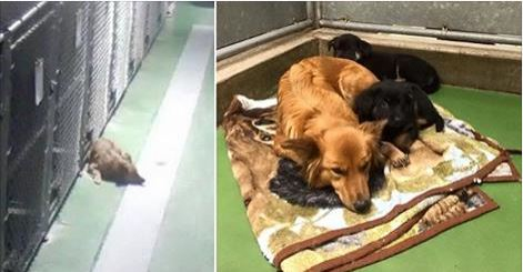 Caring Female Dog Escapes From Kennel To Comfort Two Scared Foster Puppies