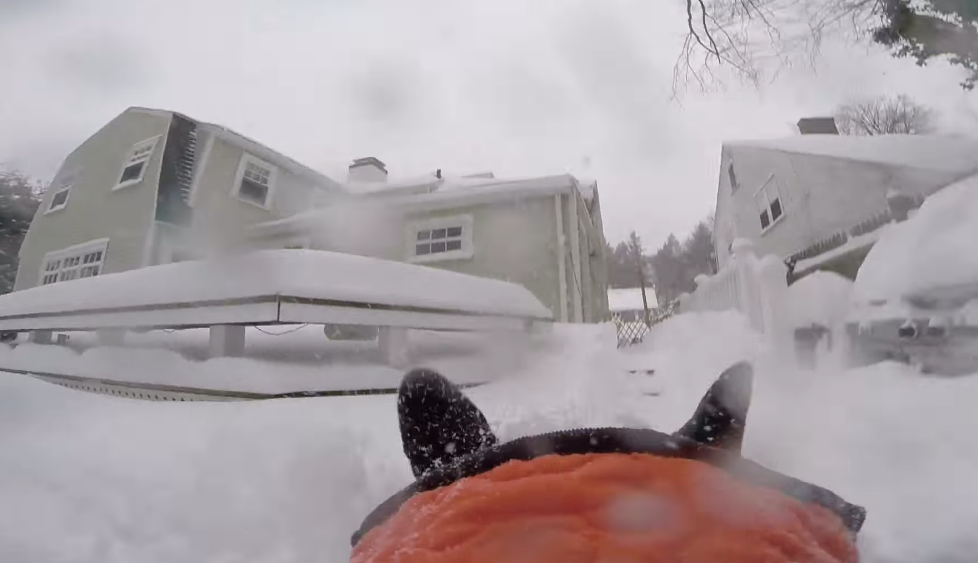 GoPro Camera Captures The Joy Of A Dog Running Through Snow