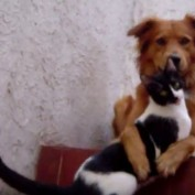 Love Story: Bernardo & Cleo
