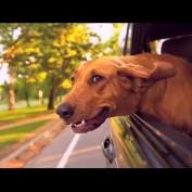 Video Attempts To Define Why God Made Dogs