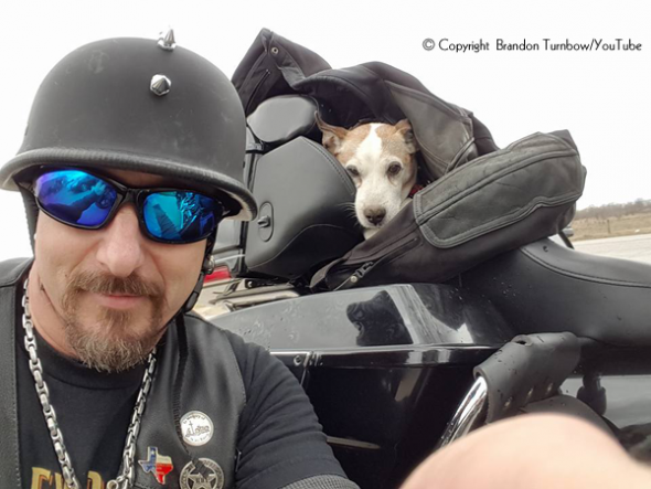Biker Saves Dog Abandoned on Highway and Makes Him Co-Pilot