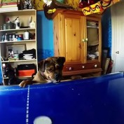 Dog Wants to Play Air Hockey, Or Maybe Just Eat a Puck