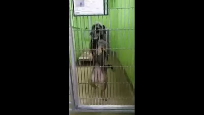 Dog Dances for Potential Adopters