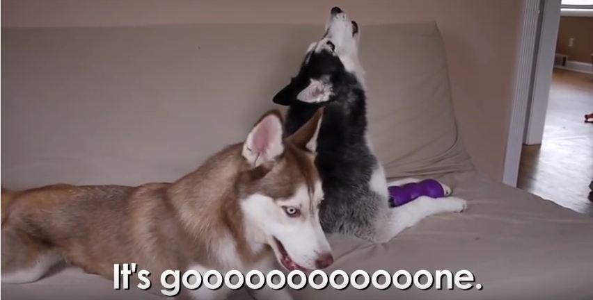 Mishka Lectures Laika on Why She Can't Have Any More Toys