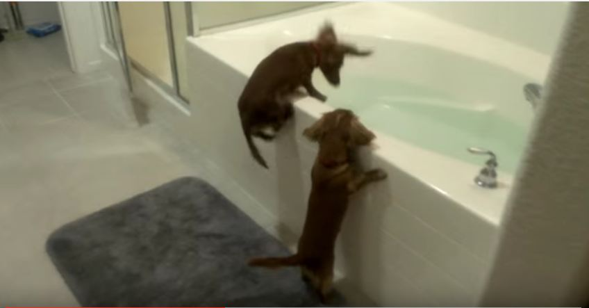 I Still Can't Believe What This Woman Filmed Her Puppies Doing. Did That Really Happen?!