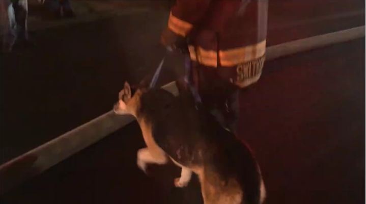 Caught On Camera: Firefighters Save A Dog Trapped In A Burning Home