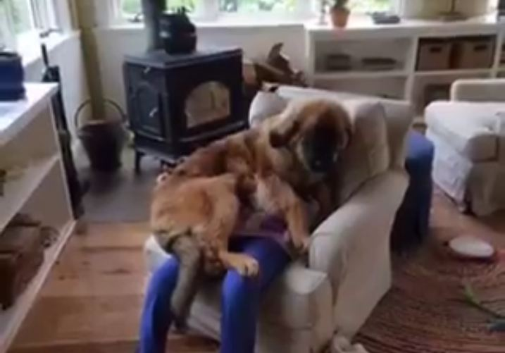 Dogs Violating the Three Foot Rule of Personal Space