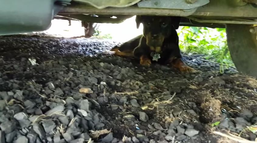 He Found A Stray Hiding Under His Truck. 4 Days Later? OMG.