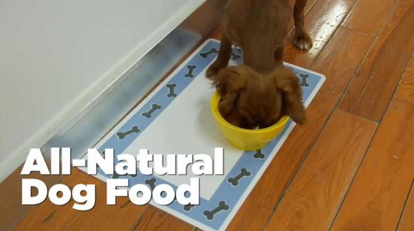 How to make your own all natural dog food in a crock pot for All natural pet cuisine