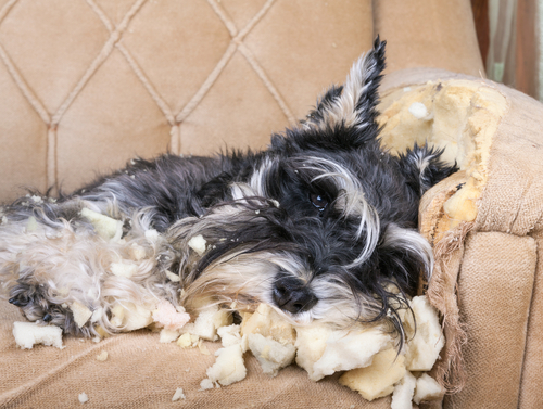 Ask A Vet: My Dog Has A Behavior Problem. What Can I Do?