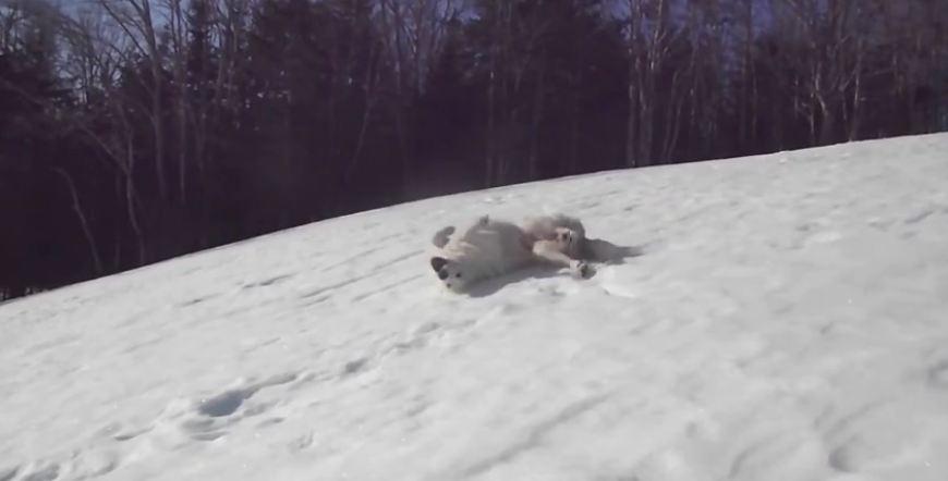 Guard dog takes a break to go sledding!