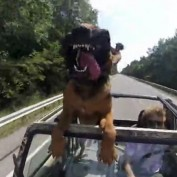 Dog Takes A Car Ride