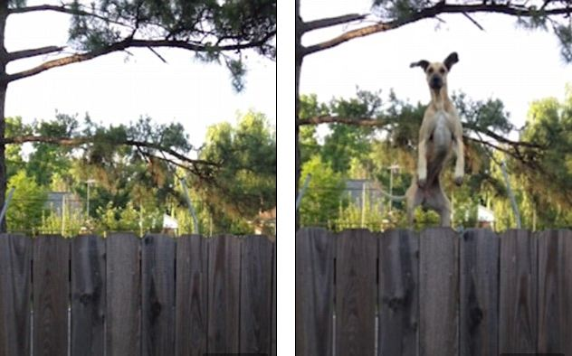 Neighbor's Nosy Dog Uses Trampoline To Jump Up And Say 'Hi!'