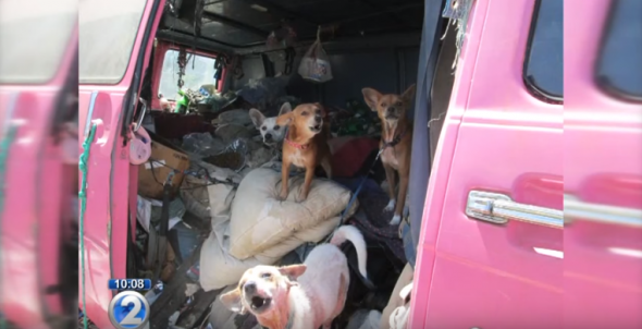 Chihuahuas Rescued From Trash Filled Van Find New Homes
