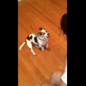 Watch This Woman Teaching Her Dog To Meow!