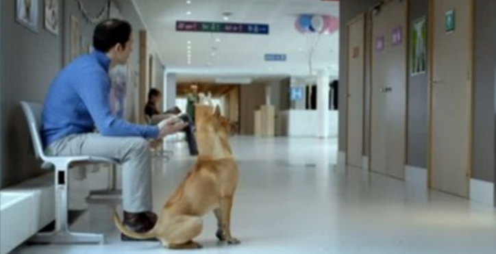 This Dad Is Waiting Outside the Delivery Room. But When The Door Opens All Puppy Lovers Heart Will Melt!