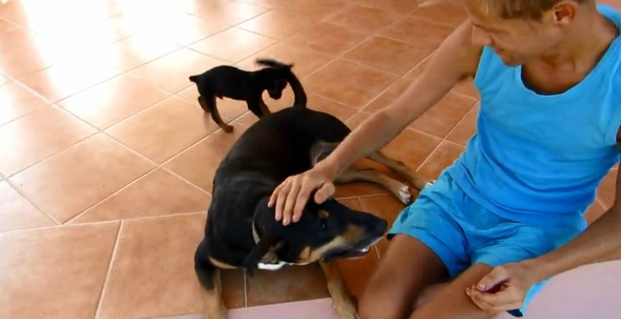 Dog runs out of patience as puppy chews on his tail
