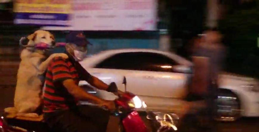 Dog Rides Motorcycle