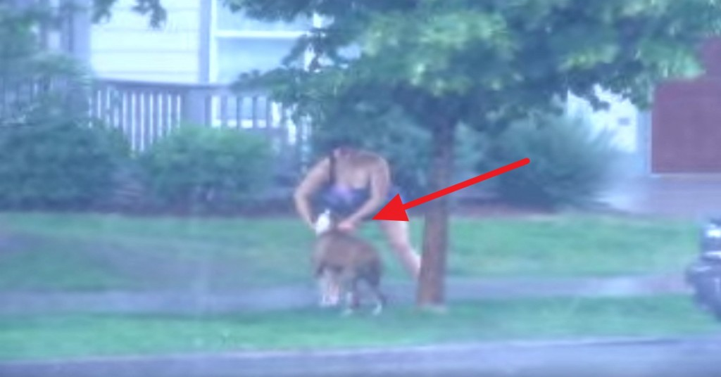 Thank God For This Woman! Watch Her Rescue A Dog Tied To A Tree During A Bad Storm!