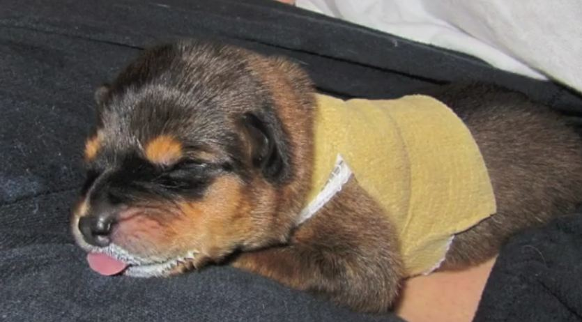 Tiny Miracle Puppy With Special Needs Completely Defies The Odds