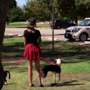 Shelter Reunites A War Veteran With His Two Beloved Dogs