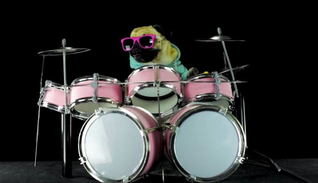 Doggy Drummer Nails It!