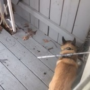 Dog Owners Come Up With A Genius Solution To Keep Their Pup Inside The Fence