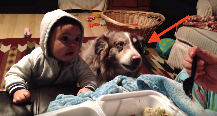 She Wants Her Baby To Say 'Mama,' But It's The Dog You'll Want To Pay Attention To