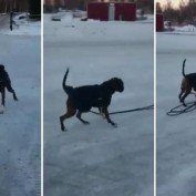 Human Tries To Make Her Dog Pull The Sled…Now Watch What Happens