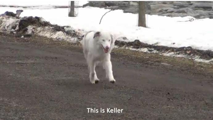 Keller's Cause
