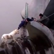 Watch These People Risk It All In Order To Save Man's Best Friend