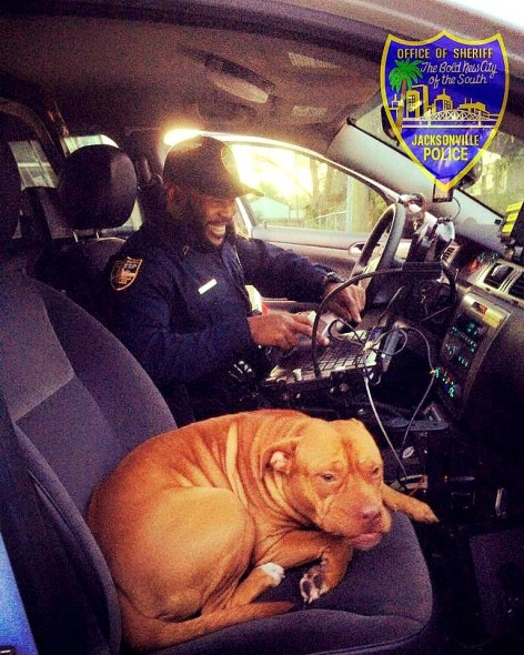 Runaway Pit Bull Christens Rookie Cop's New Cruiser